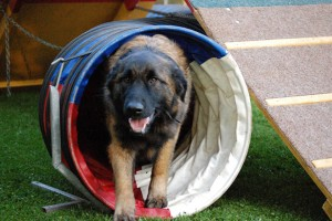 hond in tunnel